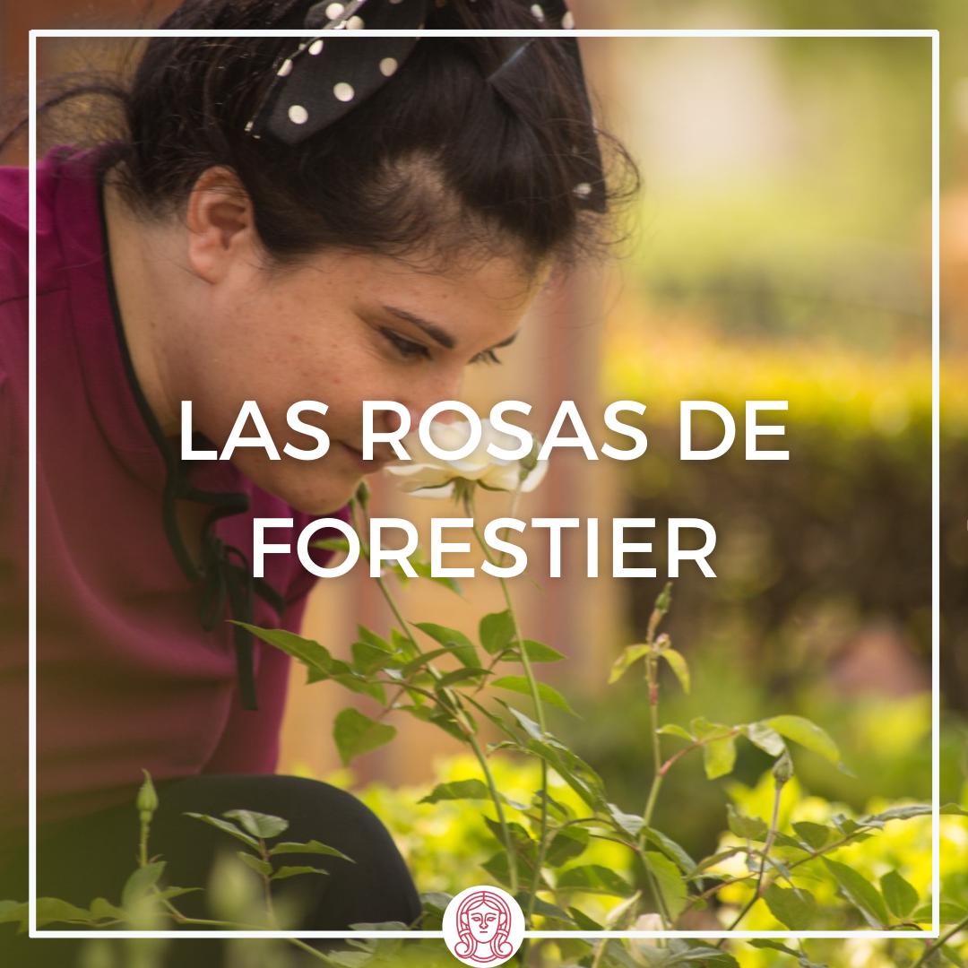 plaza de América, Plaza de las palomas, Parque María Luisa, rosas de Forestier